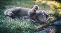 gray cat in grass 1574938198 200x110 - Gray Cat In Grass -