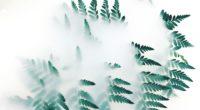 green leaf plants fog 1574937396 200x110 - Green Leaf Plants Fog -