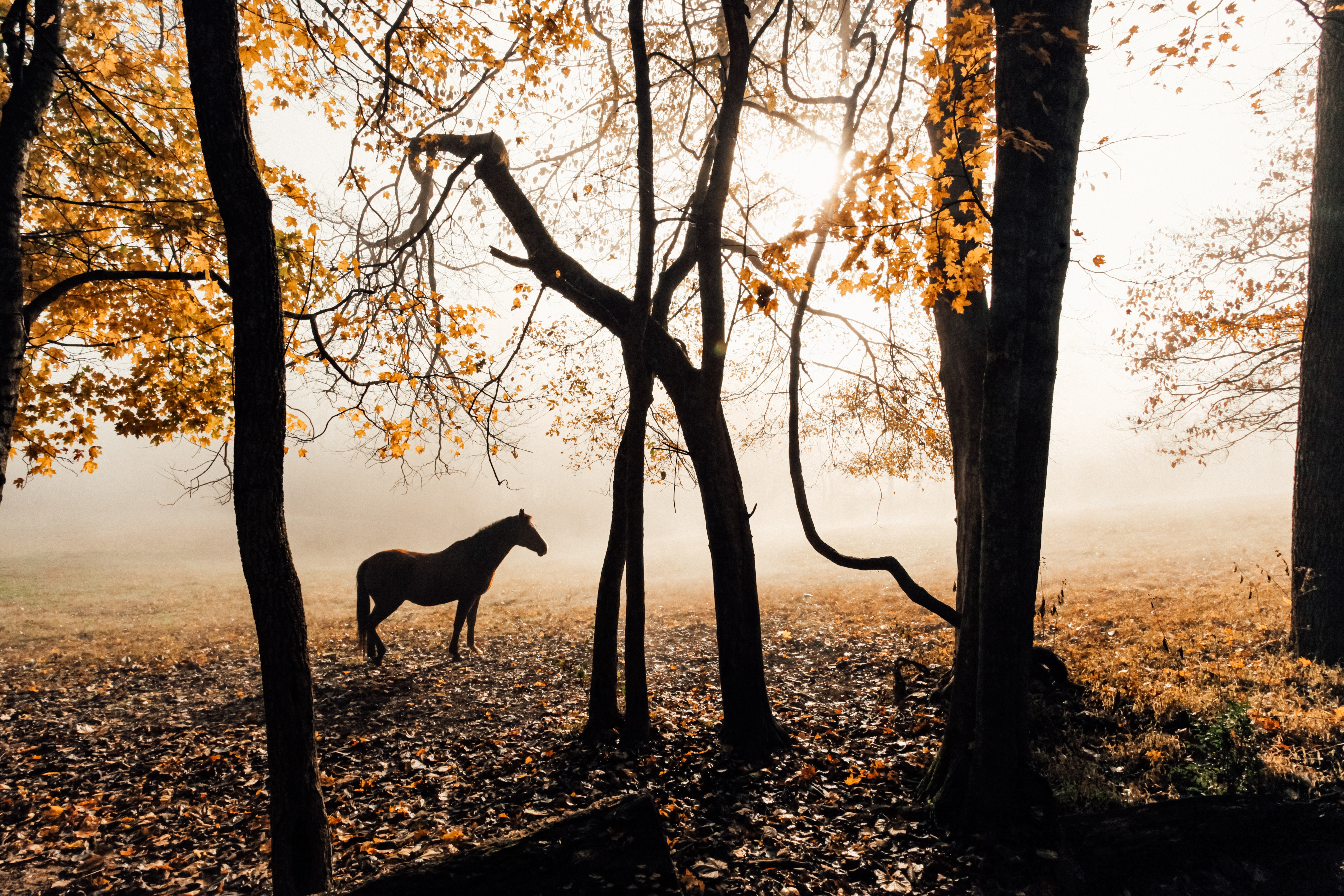 horse sunlight forest photography 1574938203 - Horse Sunlight Forest Photography -