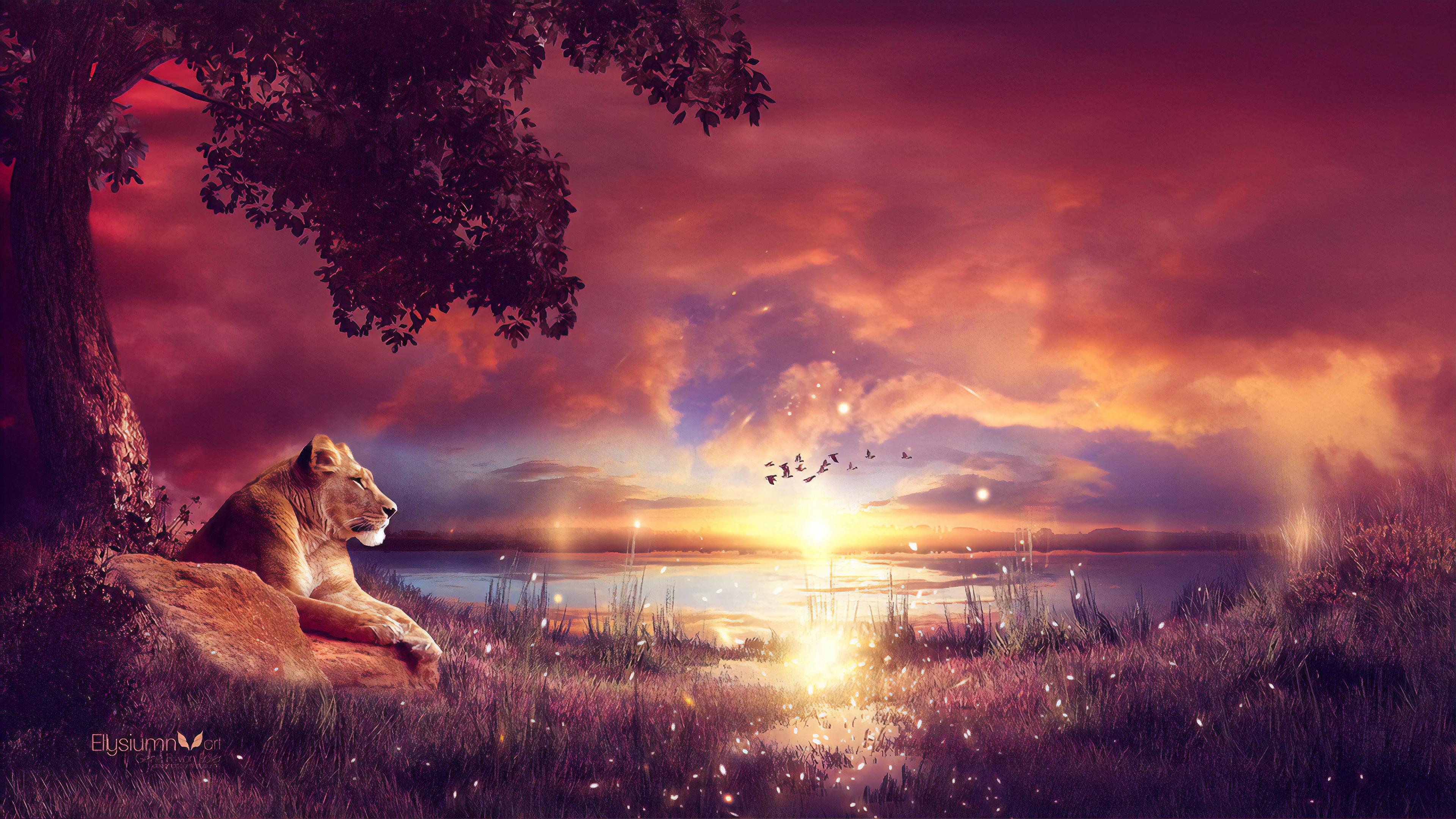 king enjoying the sunset 1574938090 - King Enjoying The Sunset -