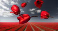 lalibela gravity flowers 1574938643 200x110 - Lalibela Gravity Flowers -