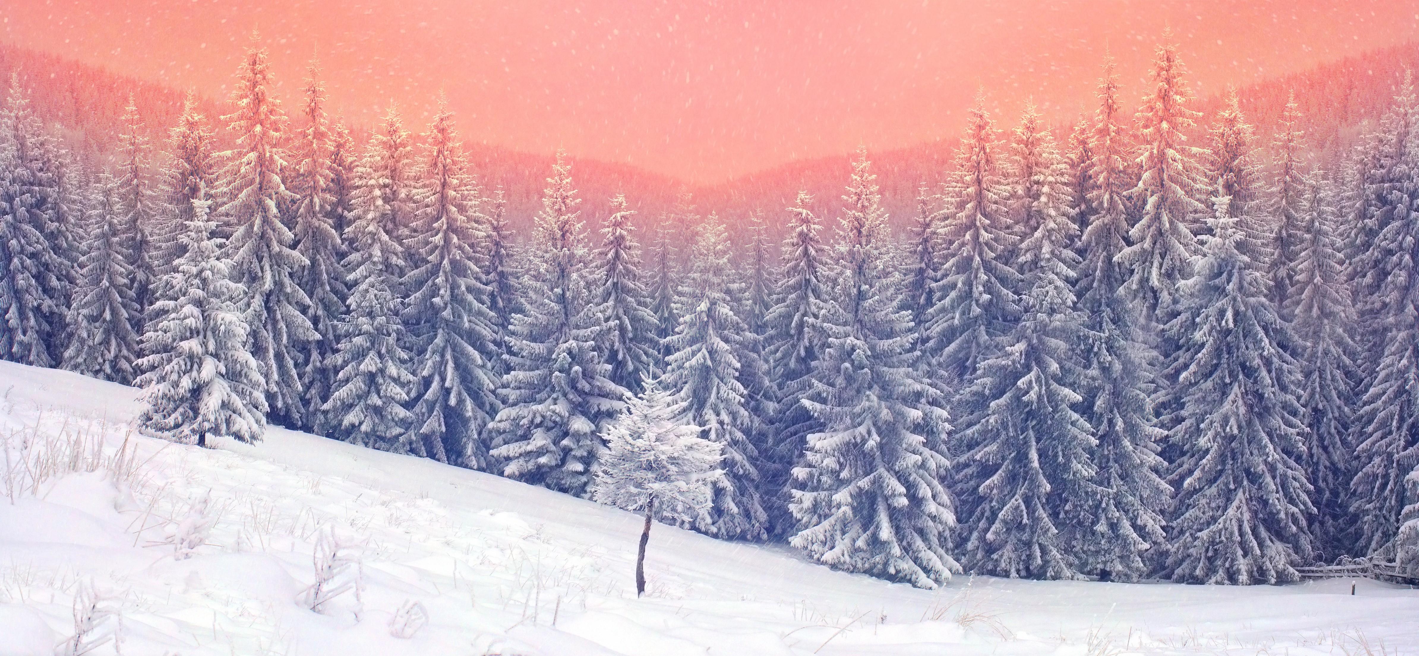 landscape snow trees 1574939525 - Landscape Snow Trees -