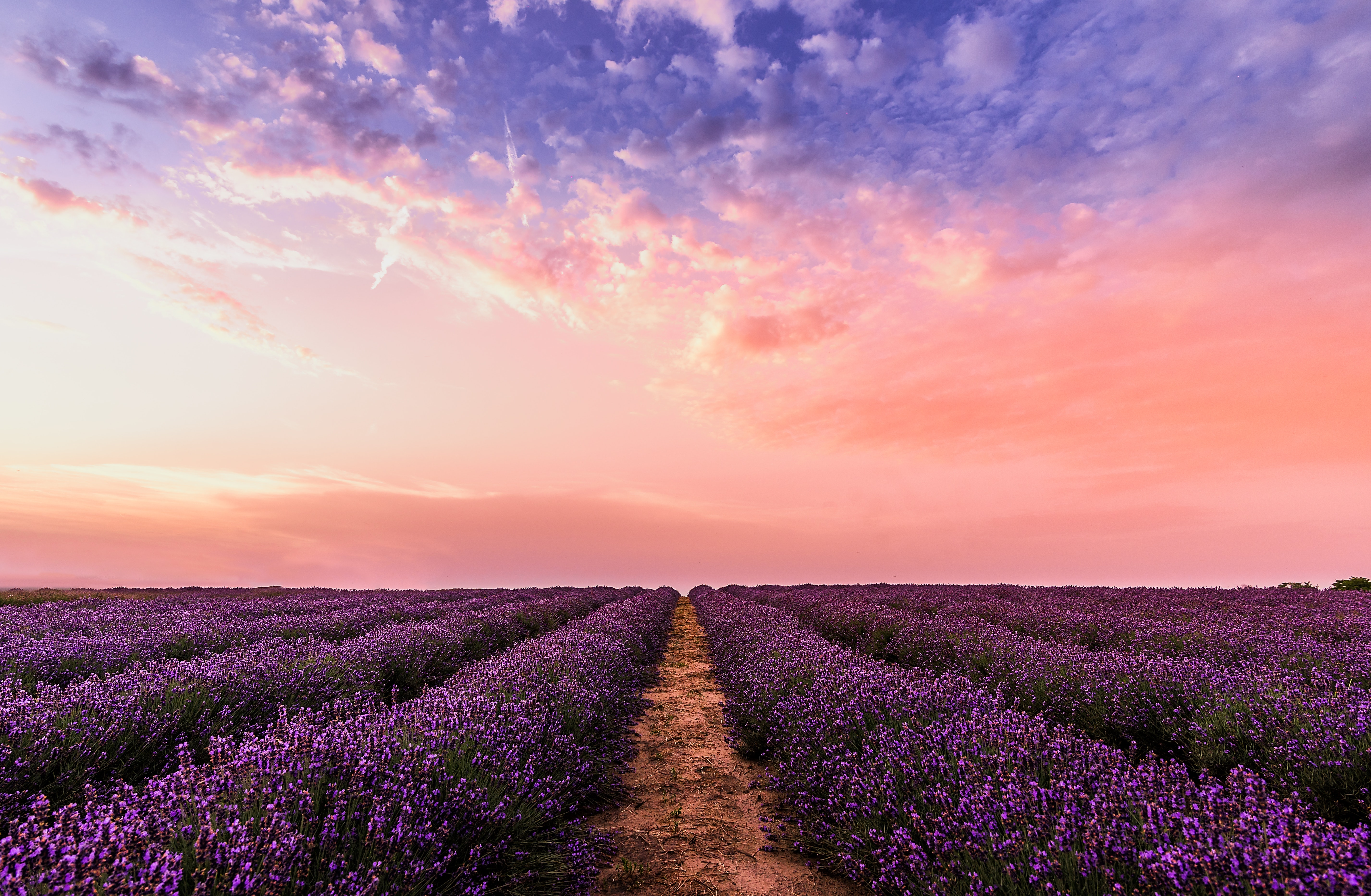 lavender field under pink sky 1574937360 - Lavender Field Under Pink Sky -