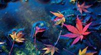 maple leafs 1574937776 200x110 - Maple Leafs -