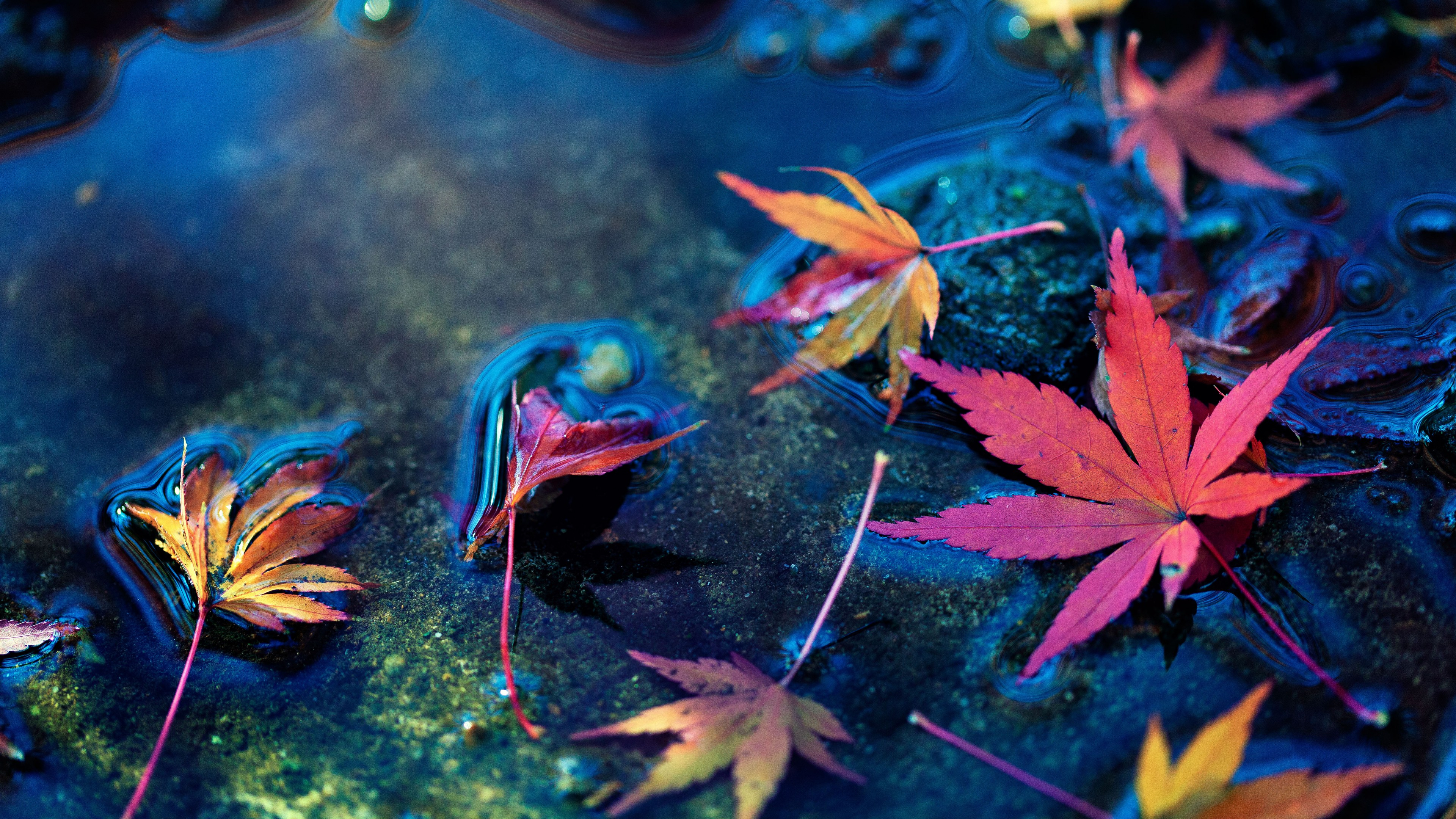 maple leafs 1574937776 - Maple Leafs -