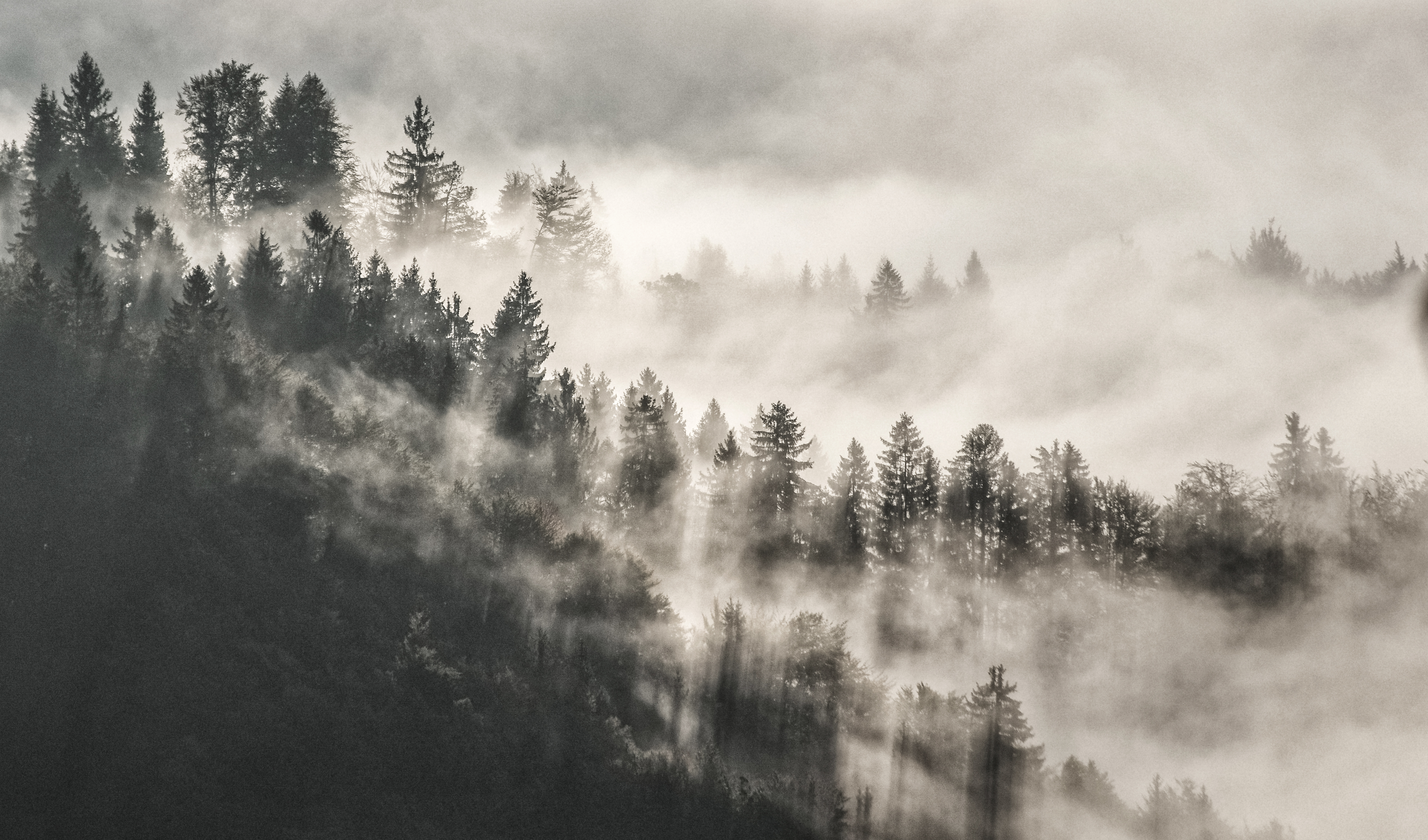 mist winter trees in mountains 1574937876 - Mist Winter Trees In Mountains -