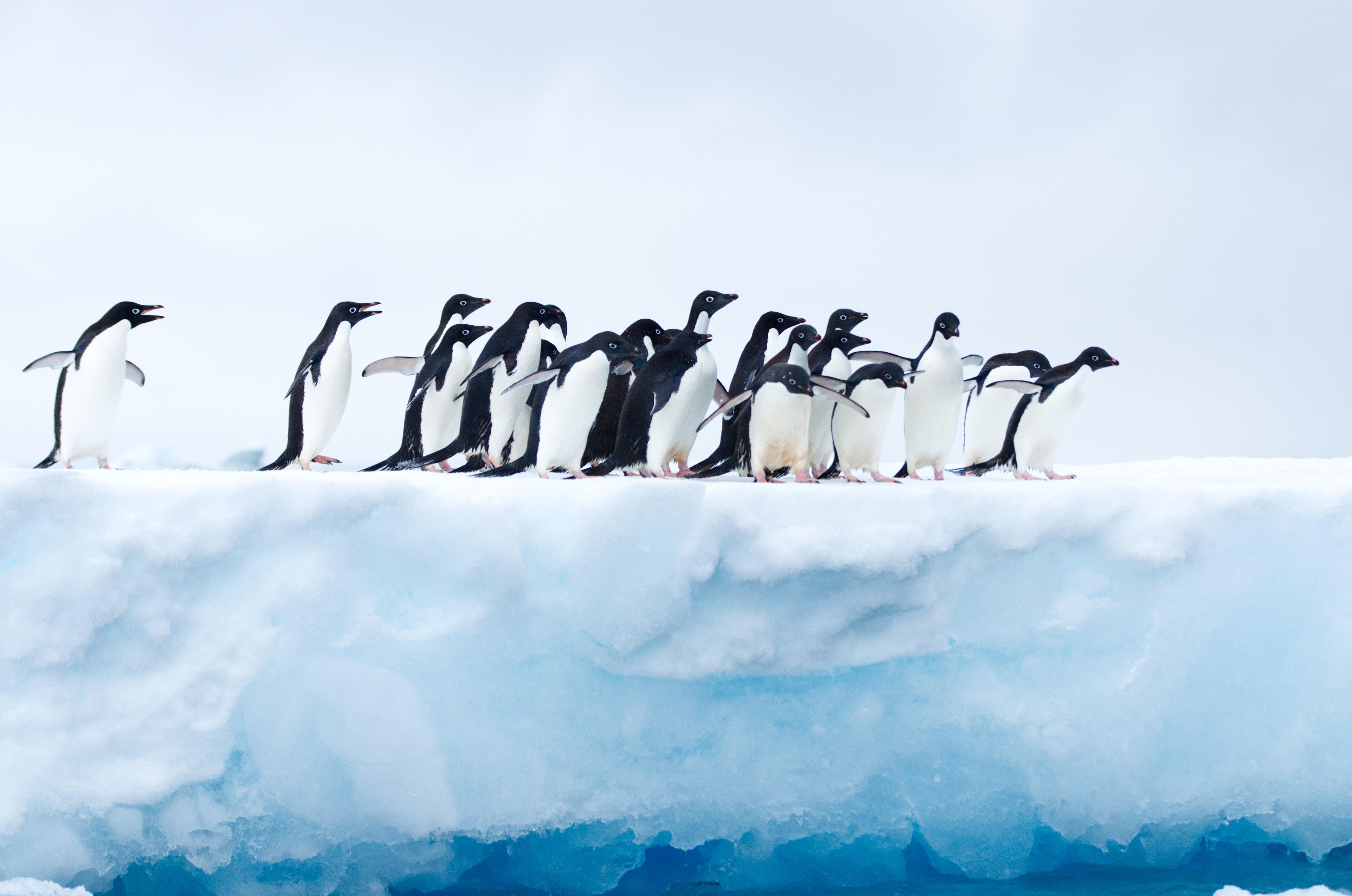 penguins in antarctica 1574938217 - Penguins In Antarctica -