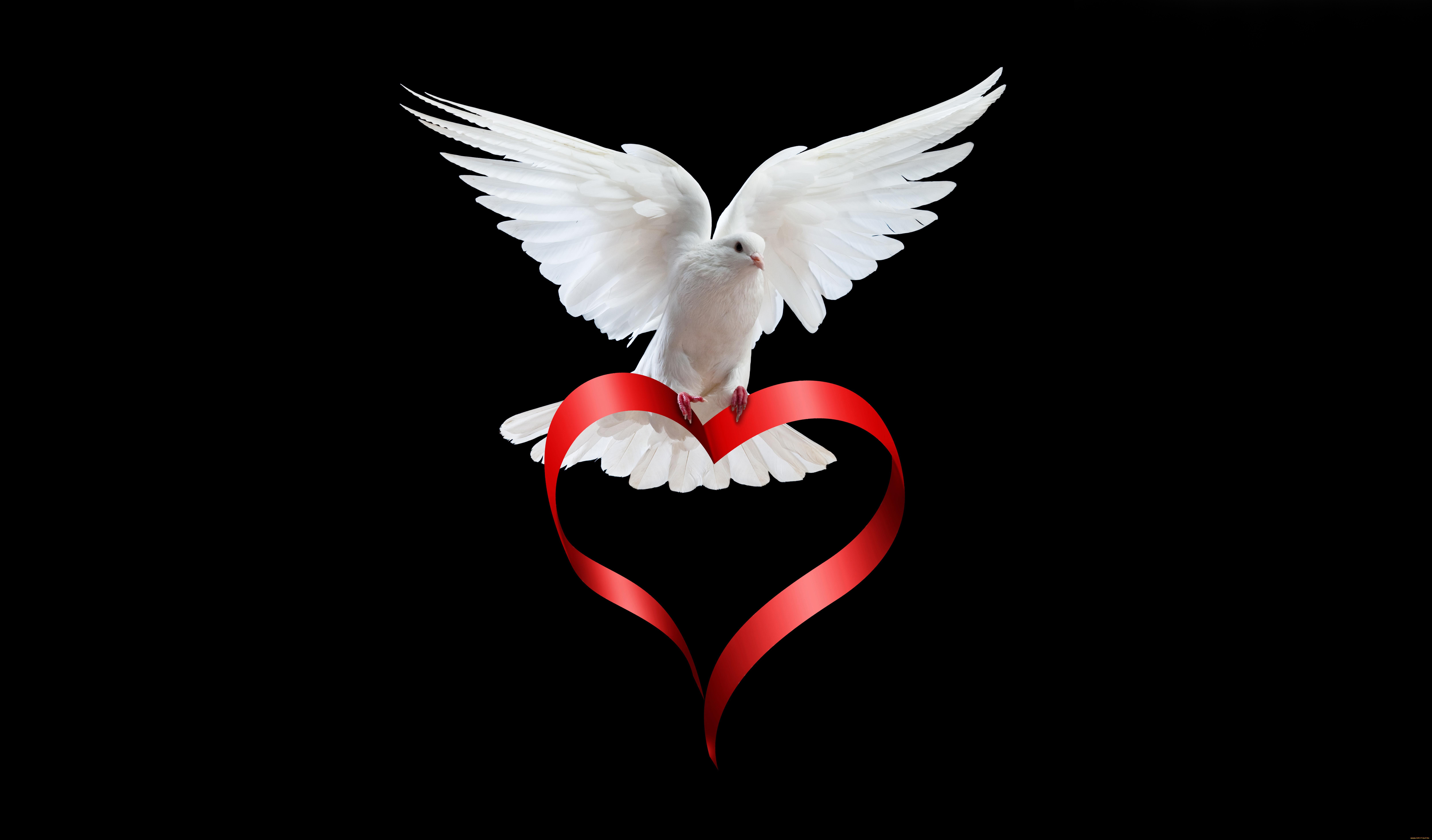 pigeon love story 1574939688 - Pigeon Love Story -