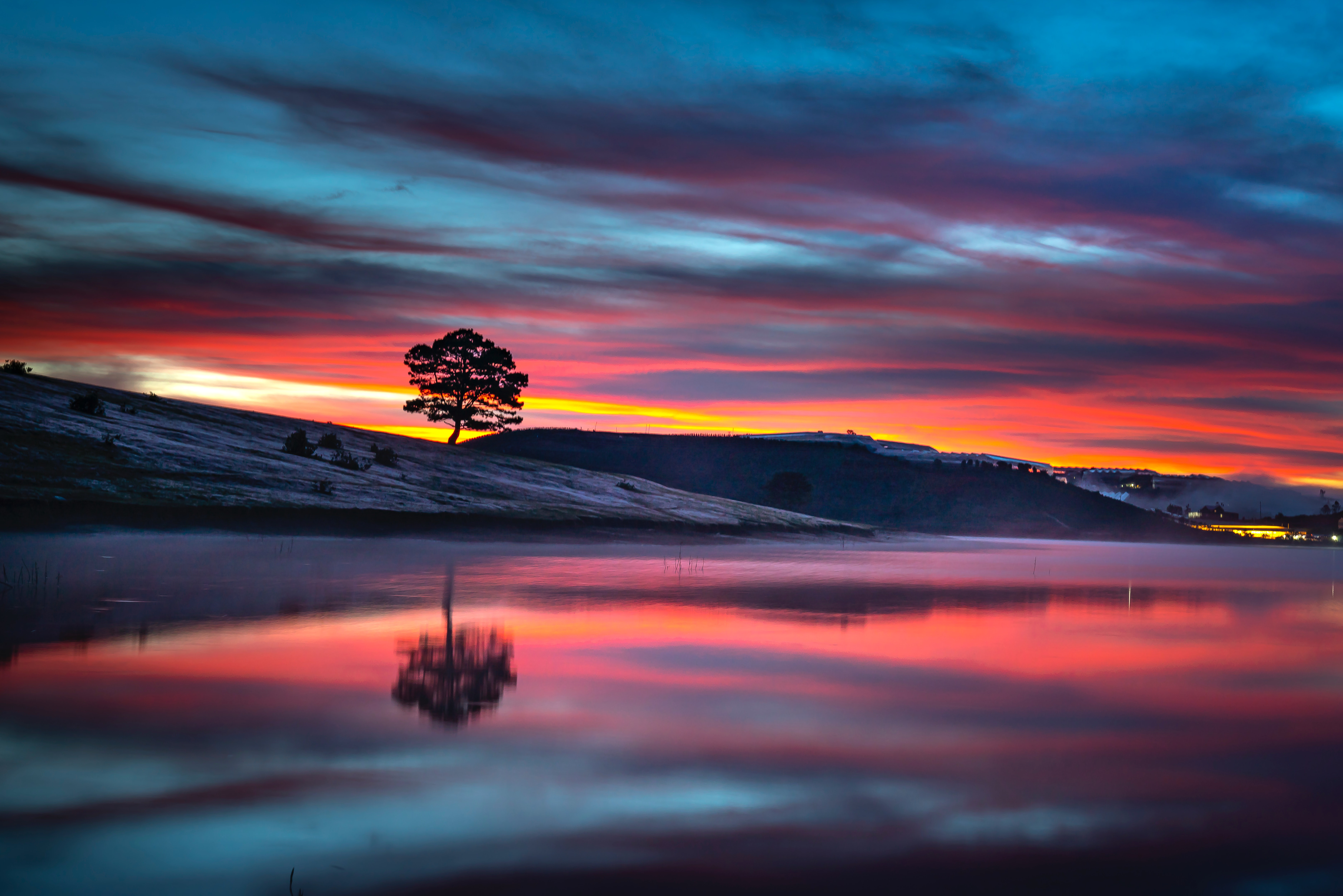 reflection tree body 1574937372 - Reflection Tree Body -