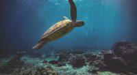 sea turtle 1574938072 200x110 - Sea Turtle -