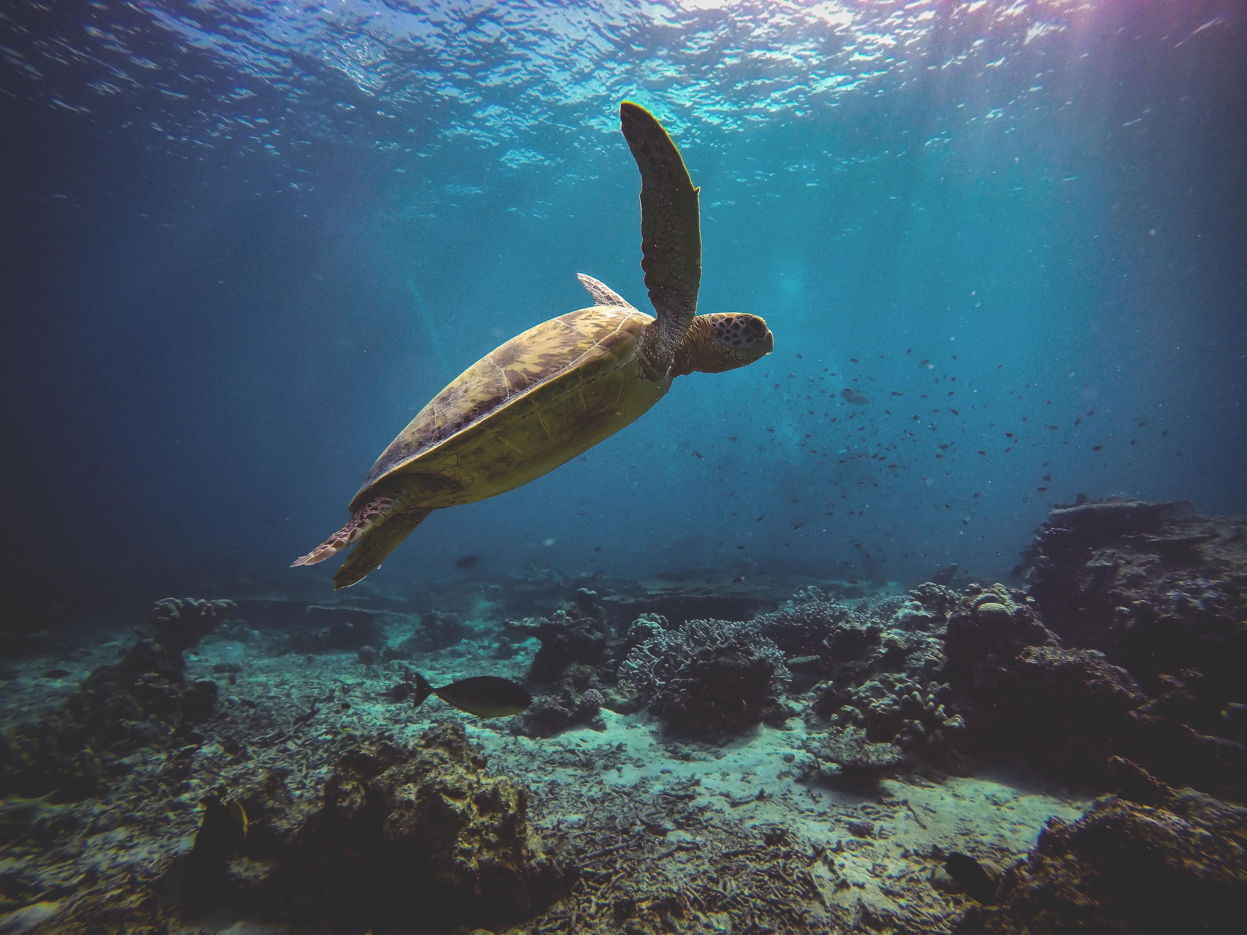 sea turtle 1574938072 - Sea Turtle -