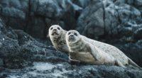 seals 1574938186 200x110 - Seals -