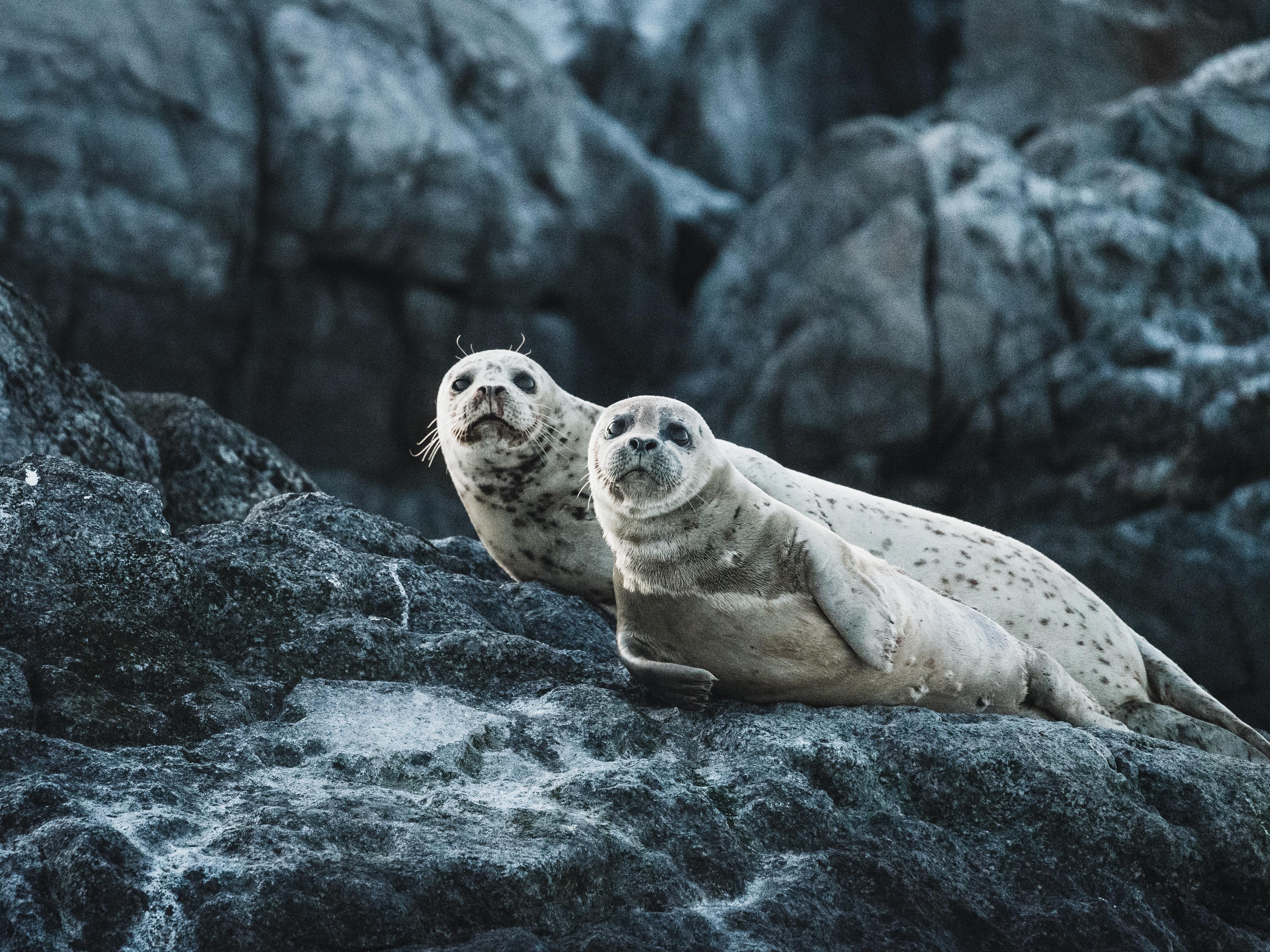 seals 1574938186 - Seals -