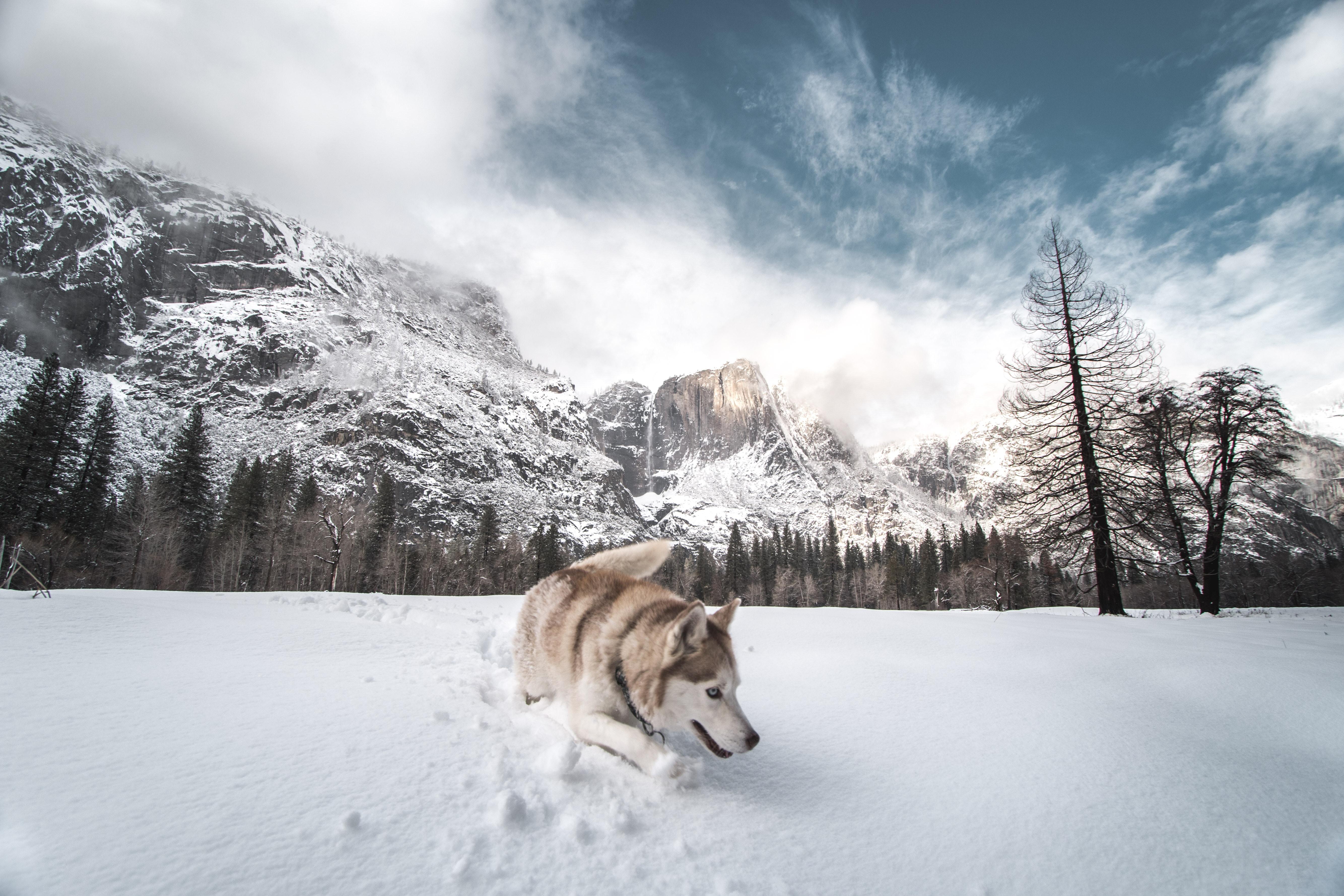 siberian husky in snow 1574938025 - Siberian Husky In Snow -
