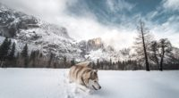 siberian husky in snow 1574939480 200x110 - Siberian Husky In Snow -
