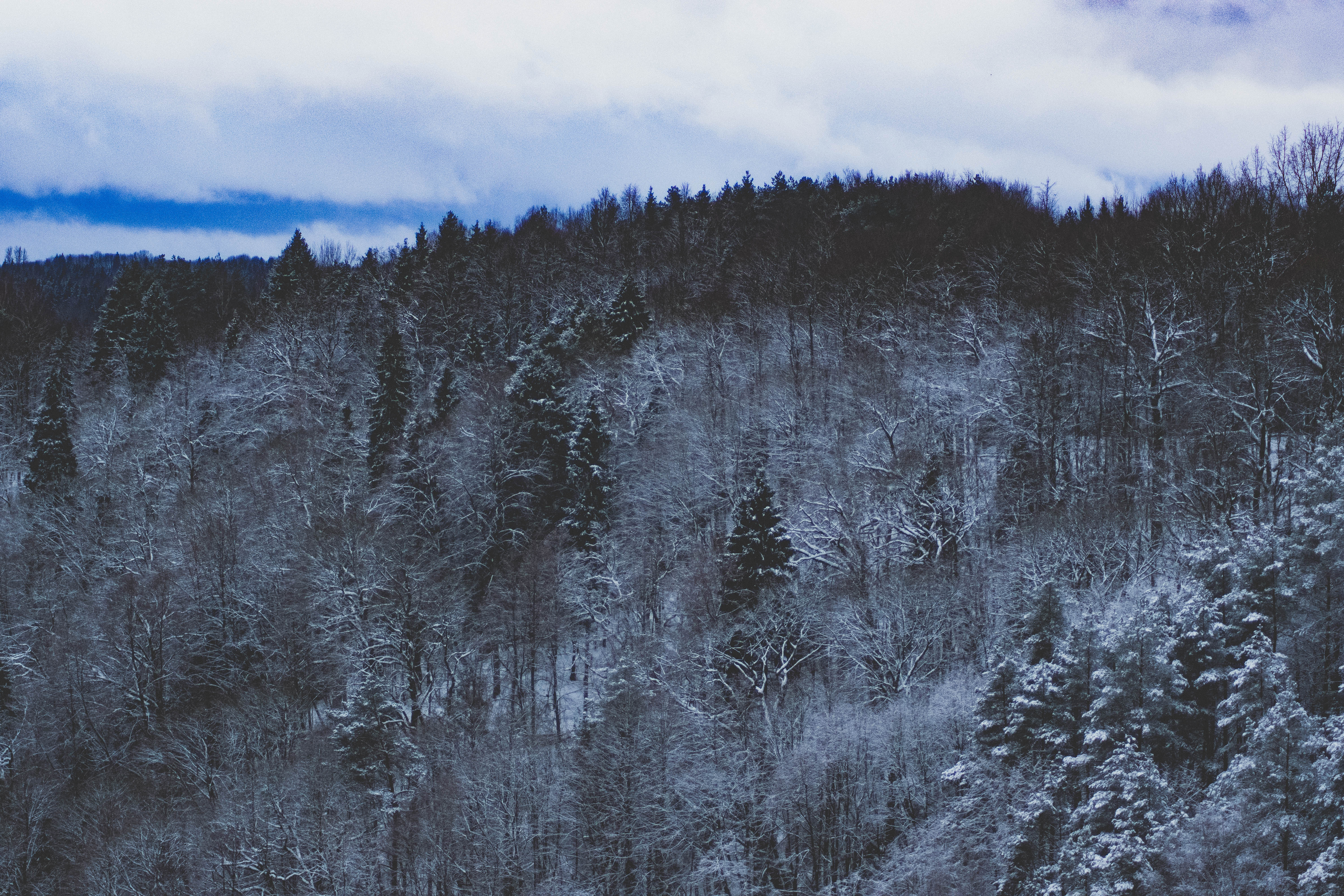 snow forest nature 1574939383 - Snow Forest Nature -