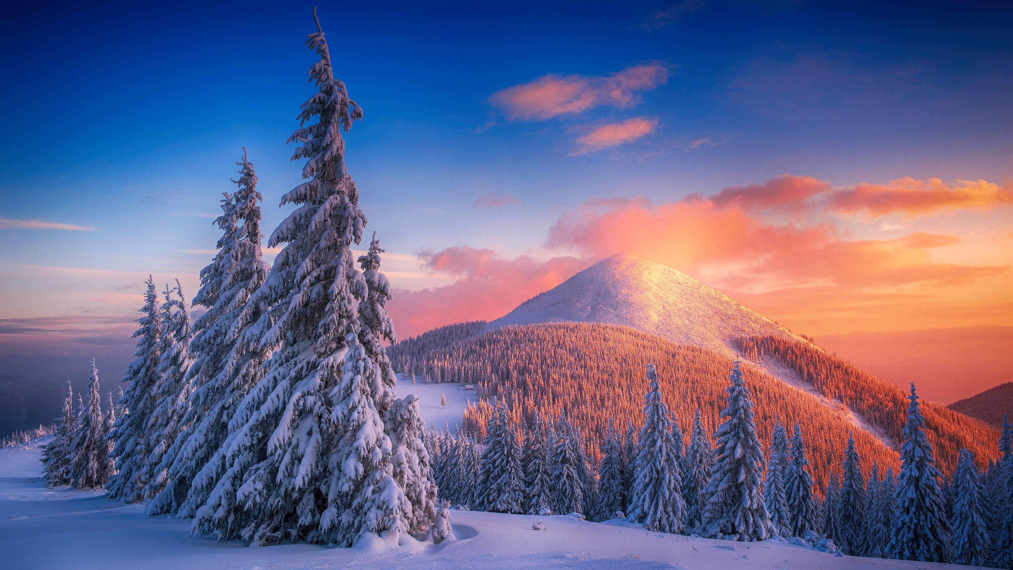 snowy pine trees and mountains 1574939664 - Snowy Pine Trees And Mountains -