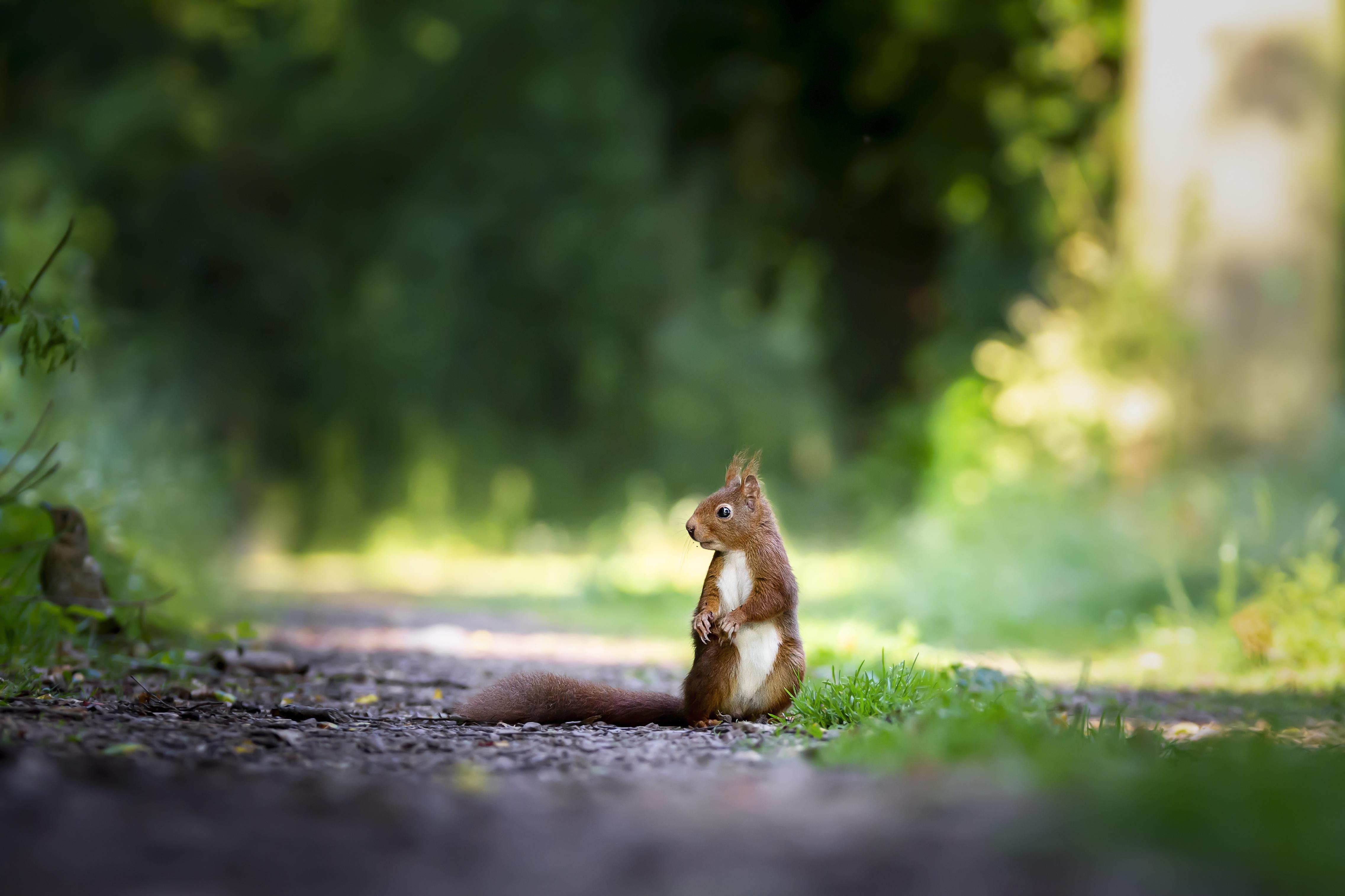 squirrels grass 1574938195 - Squirrels Grass -