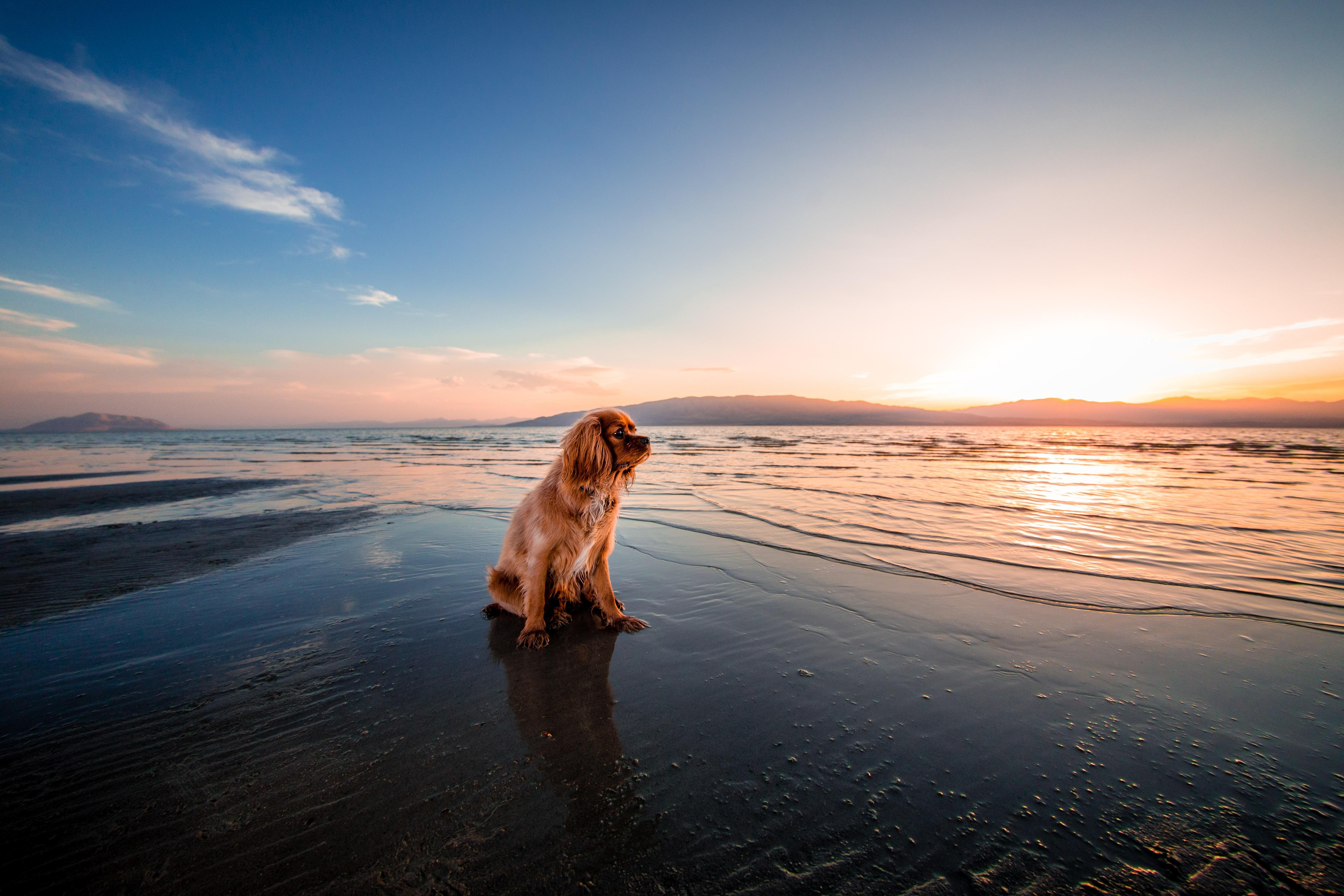 sunrise dog ocean 1574938184 - Sunrise Dog Ocean -