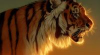 tiger evening glow 1574937965 200x110 - Tiger Evening Glow -