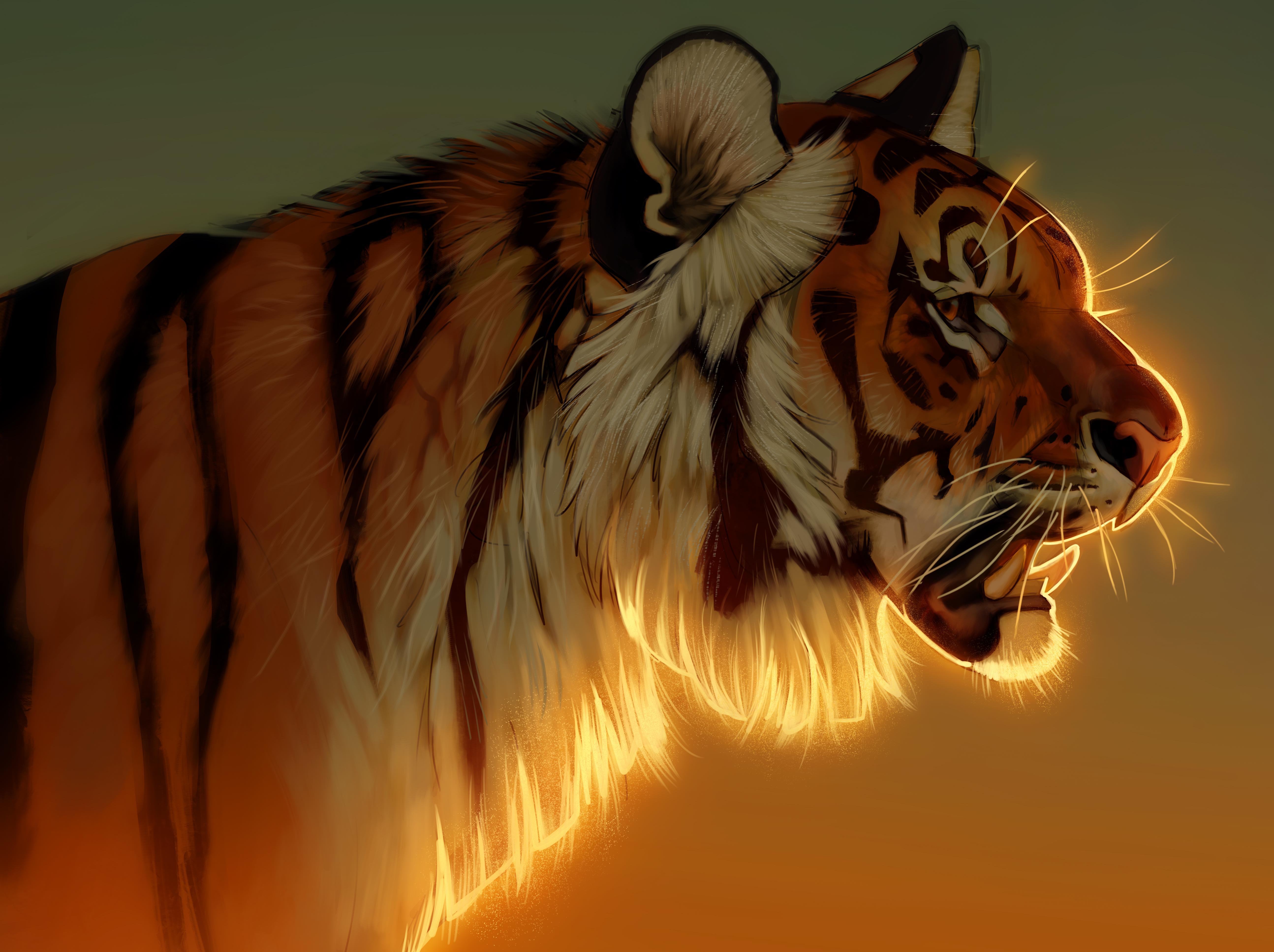 tiger evening glow 1574937965 - Tiger Evening Glow -