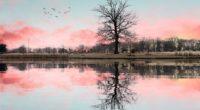 tree reflection 1574937391 200x110 - Tree Reflection -