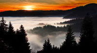 trees covered in clouds 1574937482 200x110 - Trees Covered In Clouds -