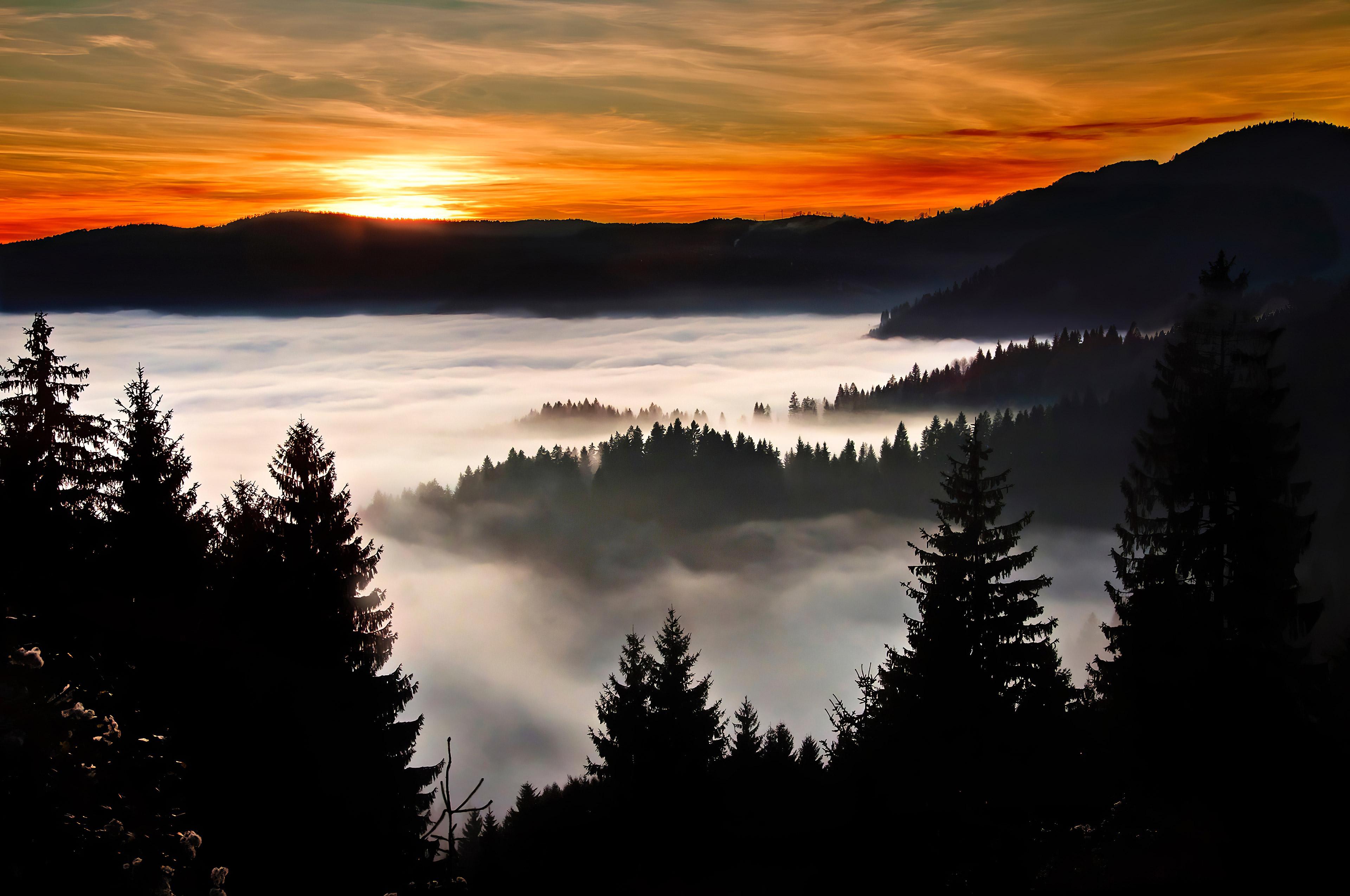 trees covered in clouds 1574937482 - Trees Covered In Clouds -