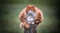 wild cat 1574938039 200x110 - Wild Cat -