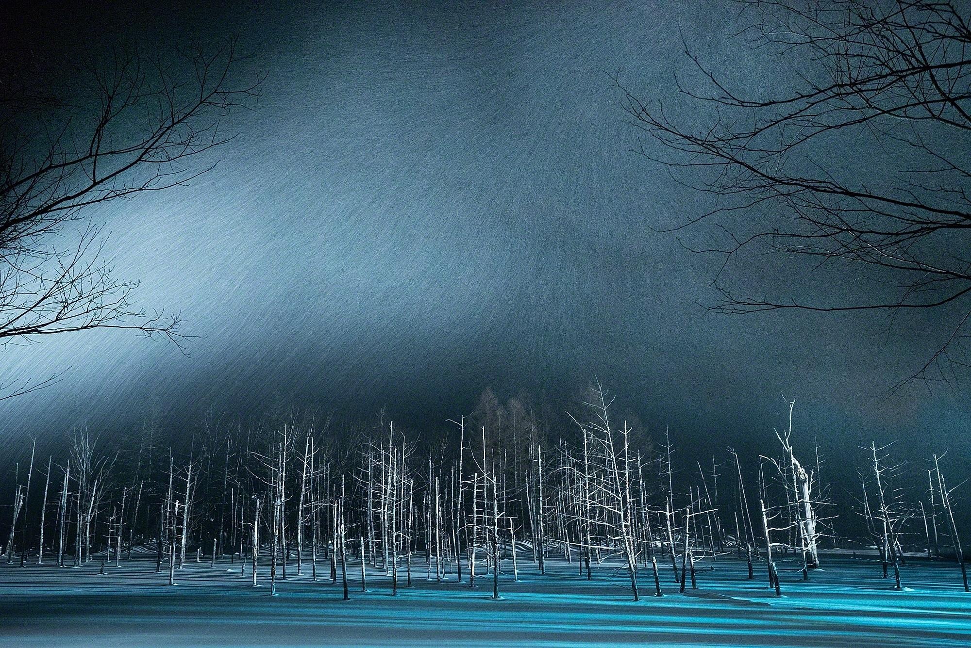 winter night snow trees 1574939595 - Winter Night Snow Trees -