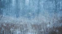 winter snow field 1574939439 200x110 - Winter Snow Field -