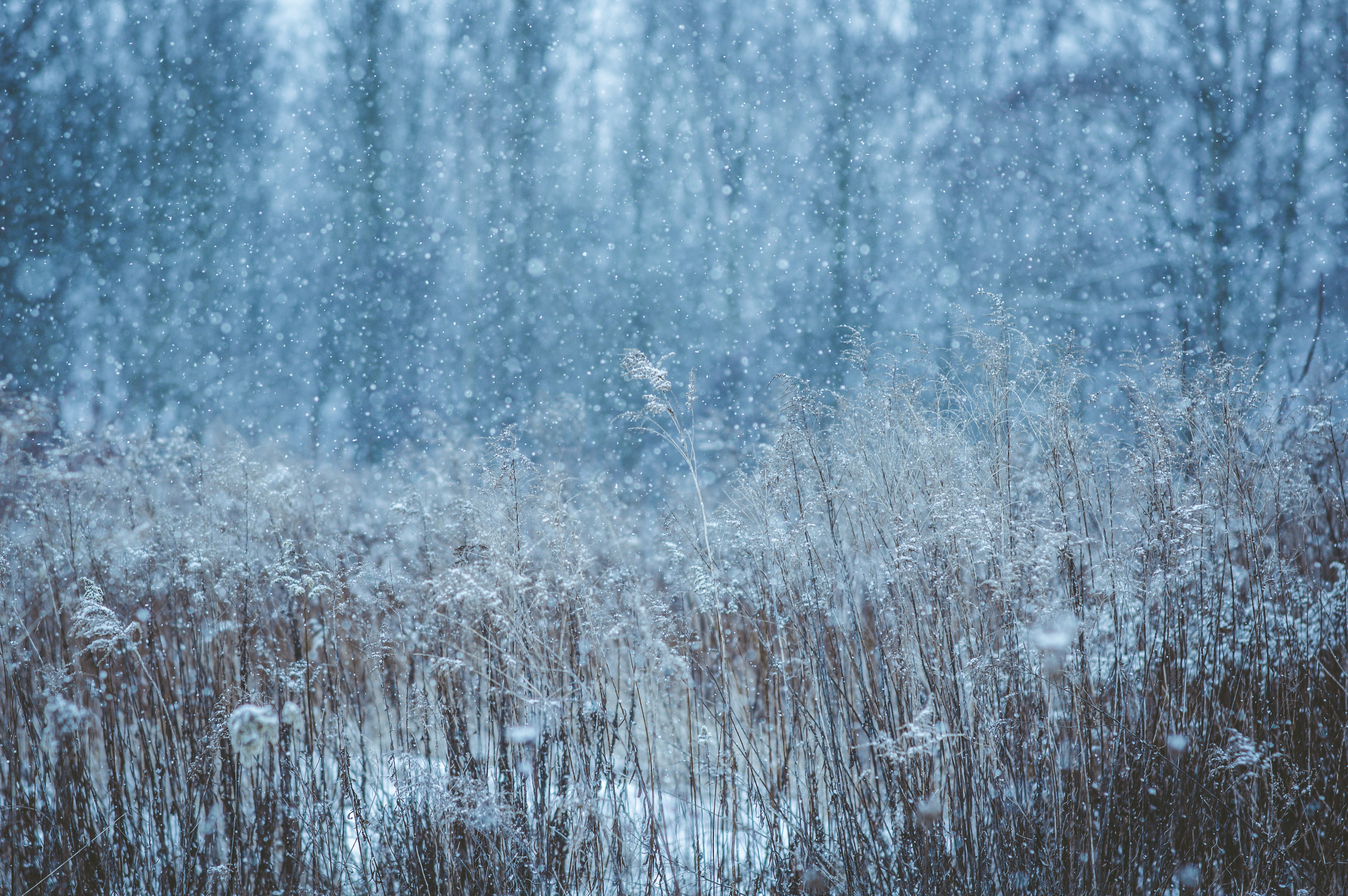 winter snow field 1574939439 - Winter Snow Field -