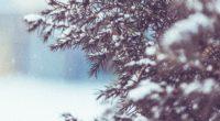 winter tree snow 1574937859 200x110 - Winter Tree Snow -
