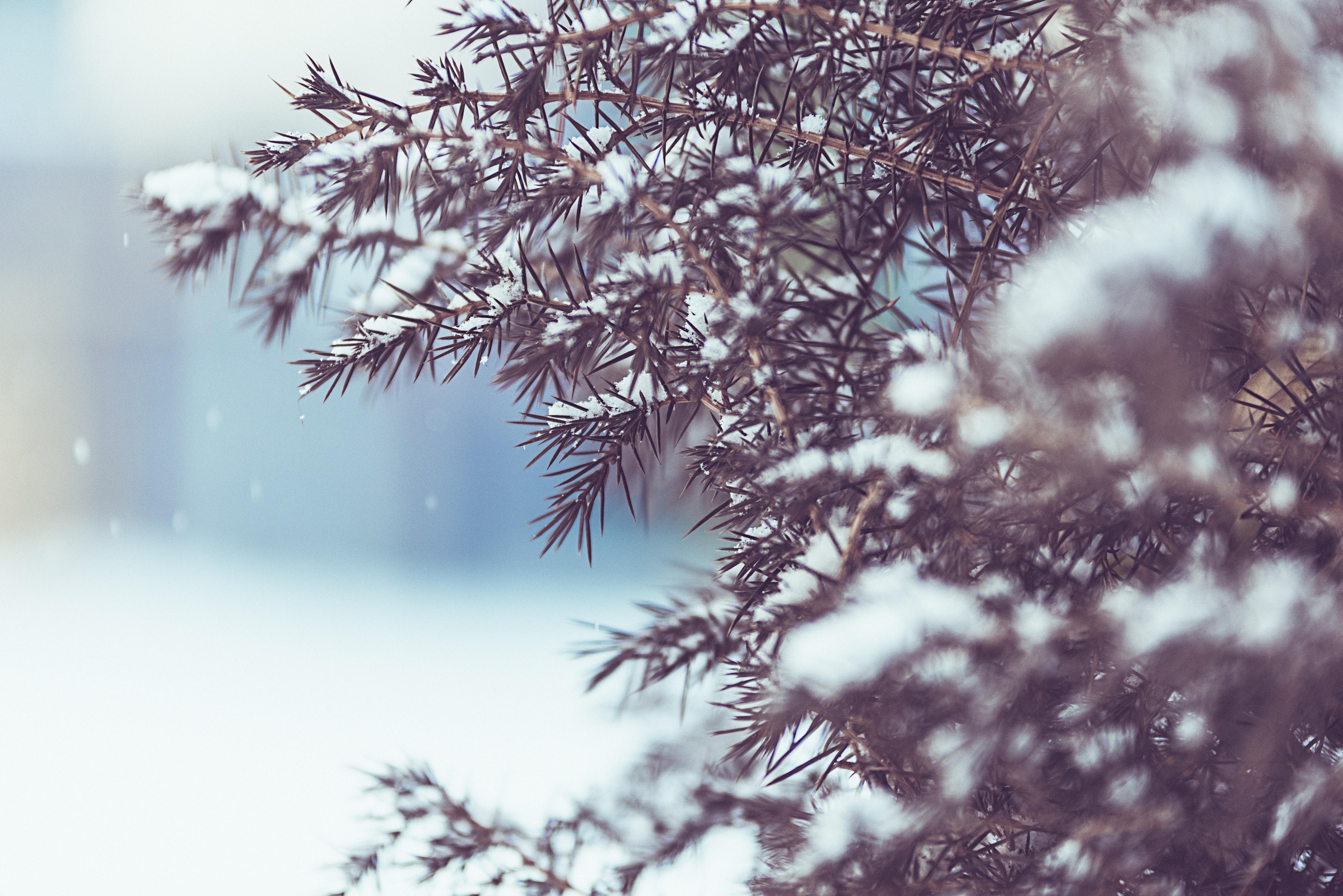 winter tree snow 1574939660 - Winter Tree Snow -