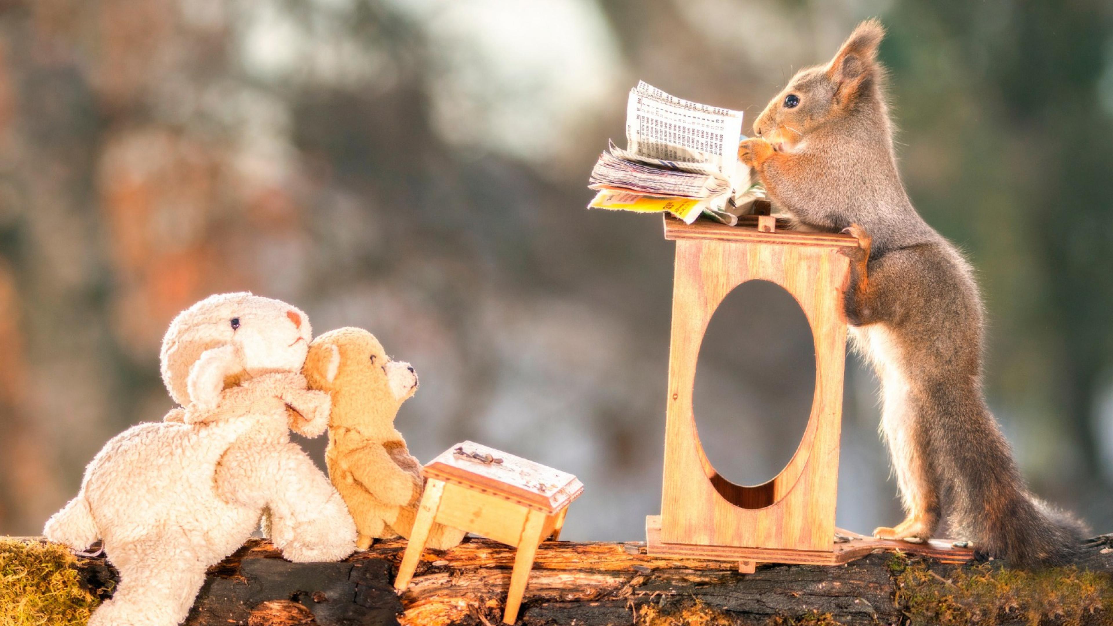 squirrels funny 1575663198 - Squirrels Funny -