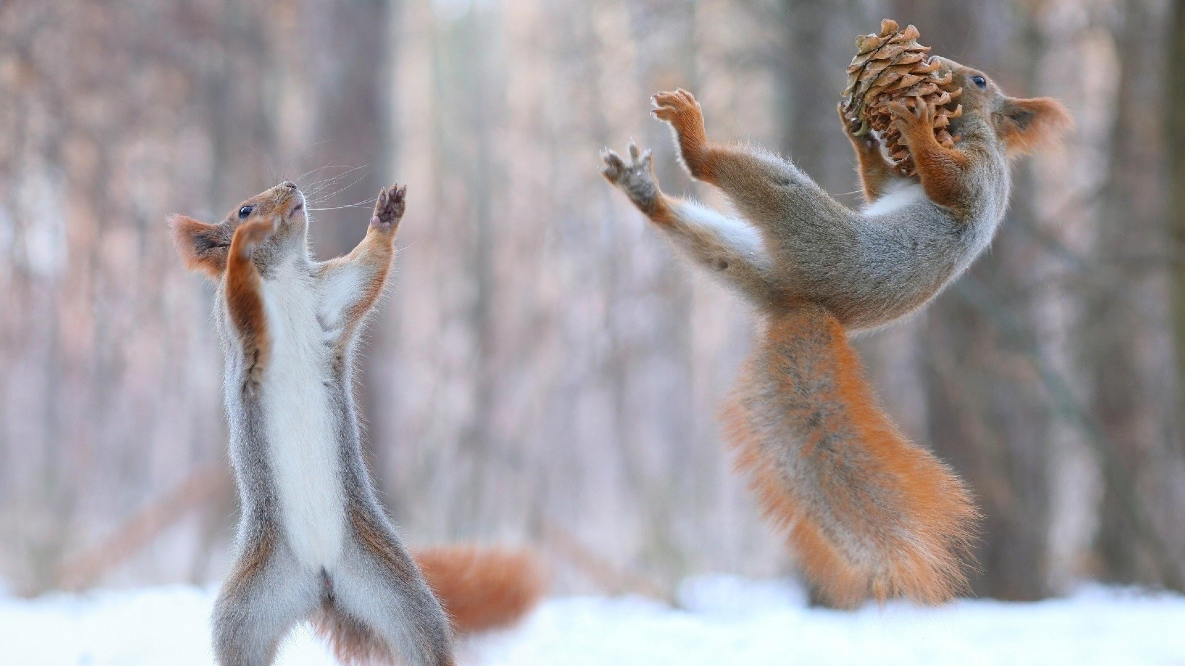 squirrels having fun in snow 1575663191 - Squirrels Having Fun In Snow -