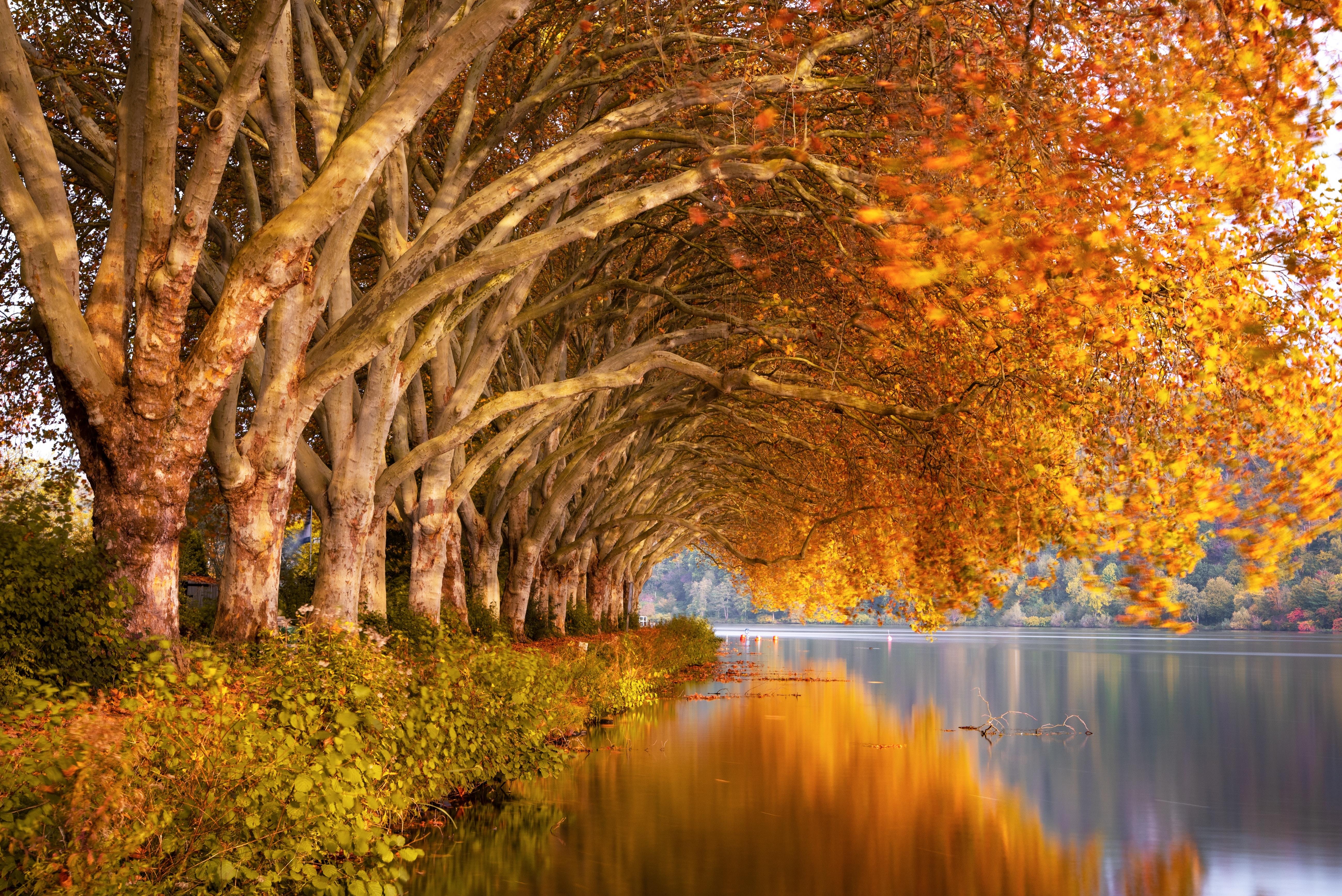 autumn trees 1579381247 - Autumn Trees - Autumn Trees wallpapers 4k, Autumn Trees landscape wallpapers 4k, Autumn Trees 4k wallpapers