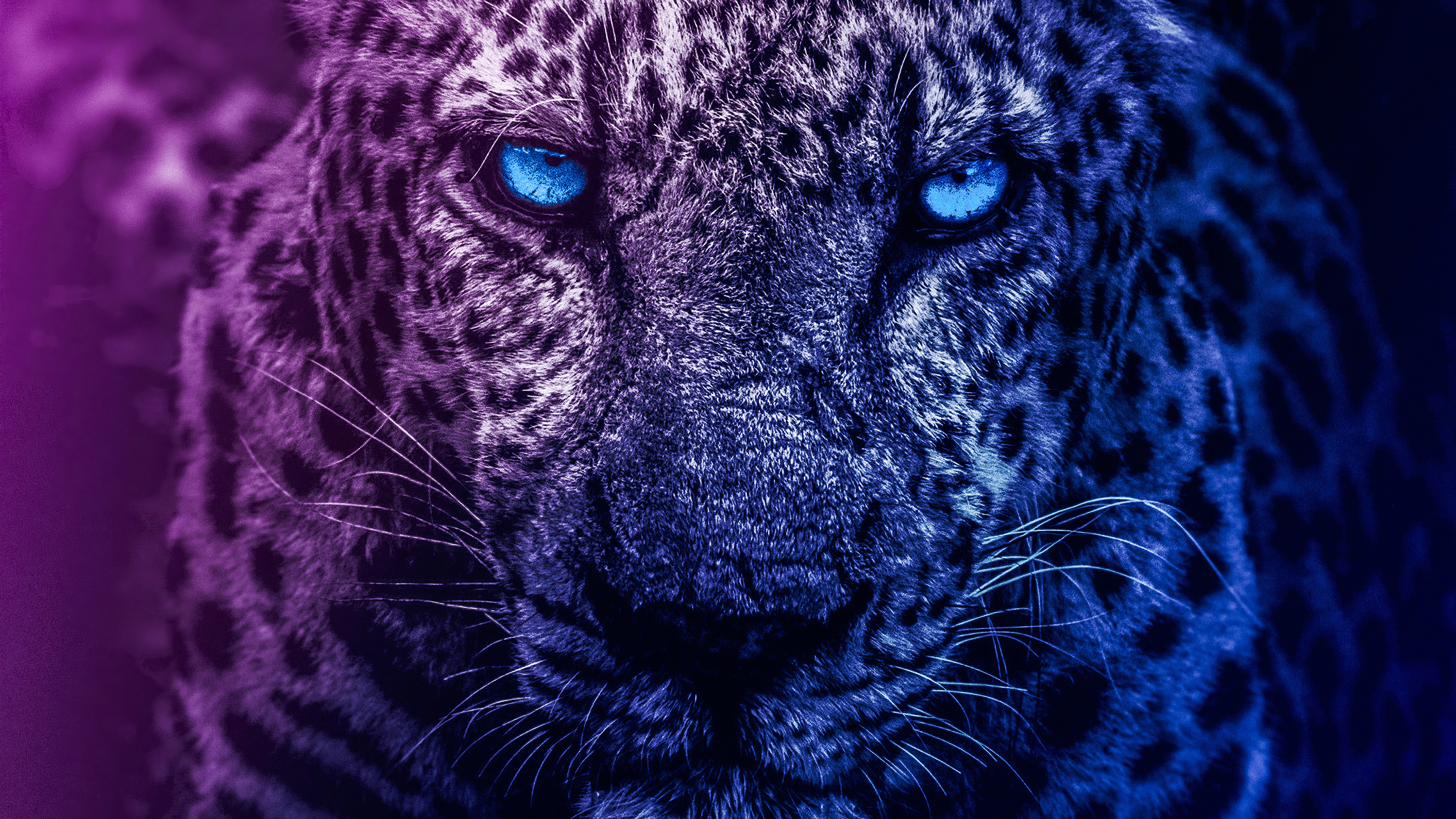 blue eyes lion 1579380386 - Blue Eyes Lion - Lion wallpapers 4k, Lion 4k wallpapper, blue eyes lions 4k wallpaper