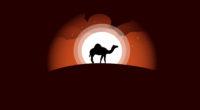camel minimal art 1578254991 200x110 - Camel Minimal Art -
