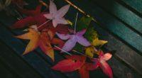colorful leaves autumn 1579380855 200x110 - Colorful Leaves Autumn - Colorful Leaves Autumn wallpapers 4k, Colorful Leaves Autumn 4k wallpapers