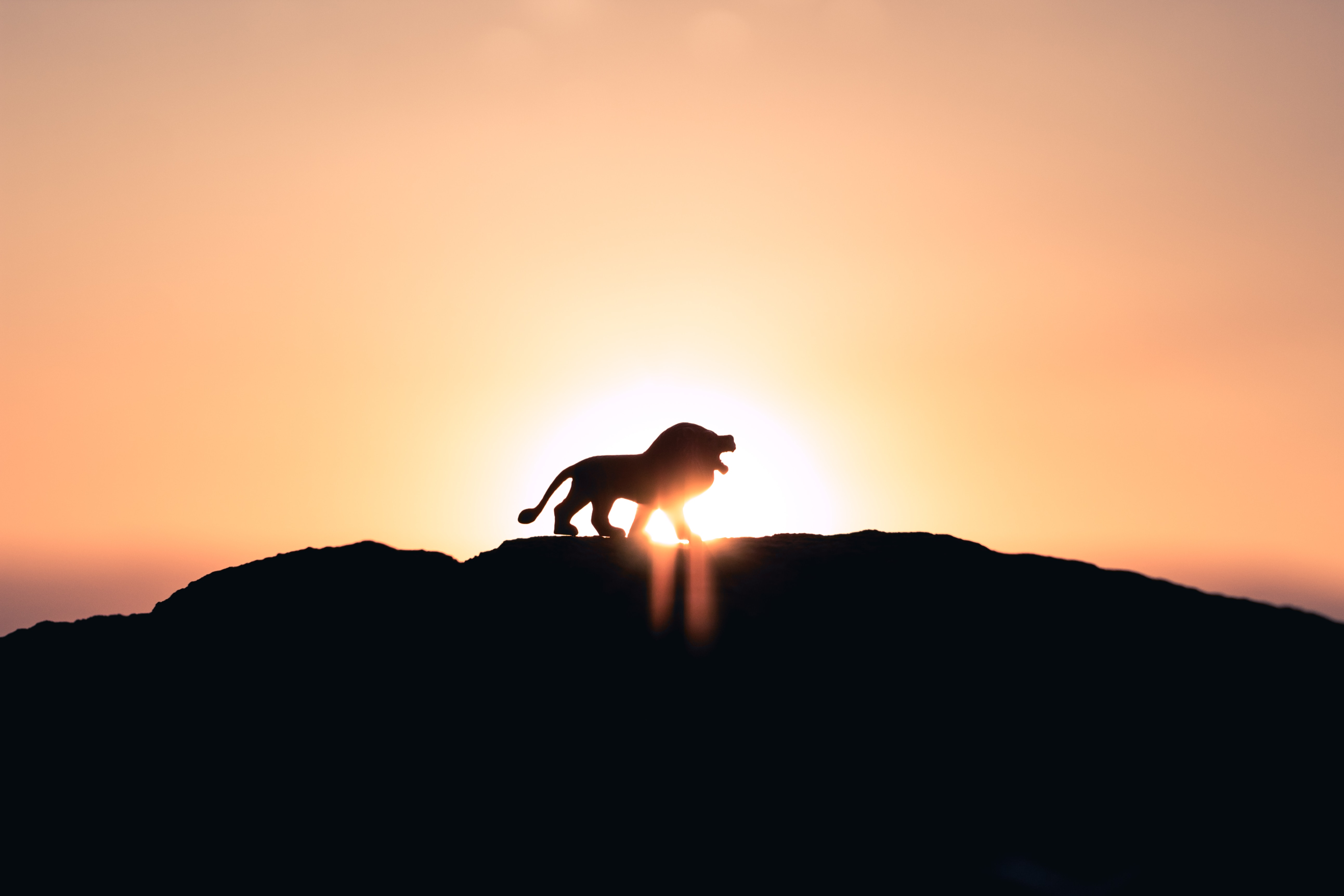 Wallpaper 4k Lion Top Of Mountain Lion Mountain Wallpapers 4k