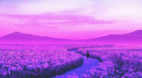 day dreaming lavender field 1596932265 200x110 - Day Dreaming Lavender Field -