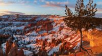 ancient bristlecone pine over bryce canyon 4k 1602606182 200x110 - Ancient Bristlecone Pine Over Bryce Canyon 4k - Ancient Bristlecone Pine Over Bryce Canyon 4k wallpapers