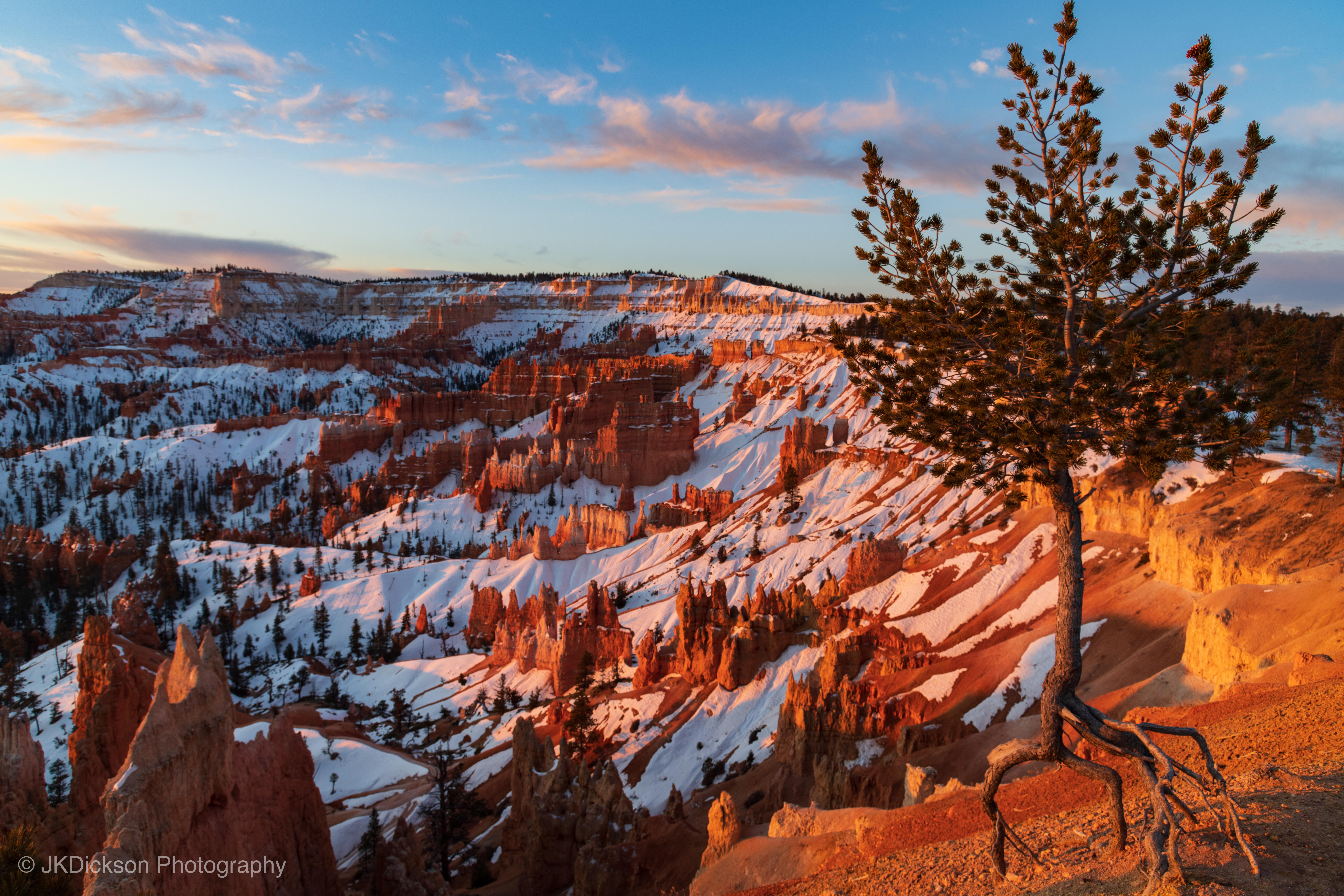 ancient bristlecone pine over bryce canyon 4k 1602606182 - Ancient Bristlecone Pine Over Bryce Canyon 4k - Ancient Bristlecone Pine Over Bryce Canyon 4k wallpapers