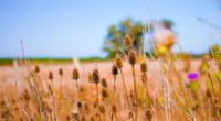 bokeh field crops 4k 1602501613 200x110 - Bokeh Field Crops 4k - Bokeh Field Crops 4k wallpapers