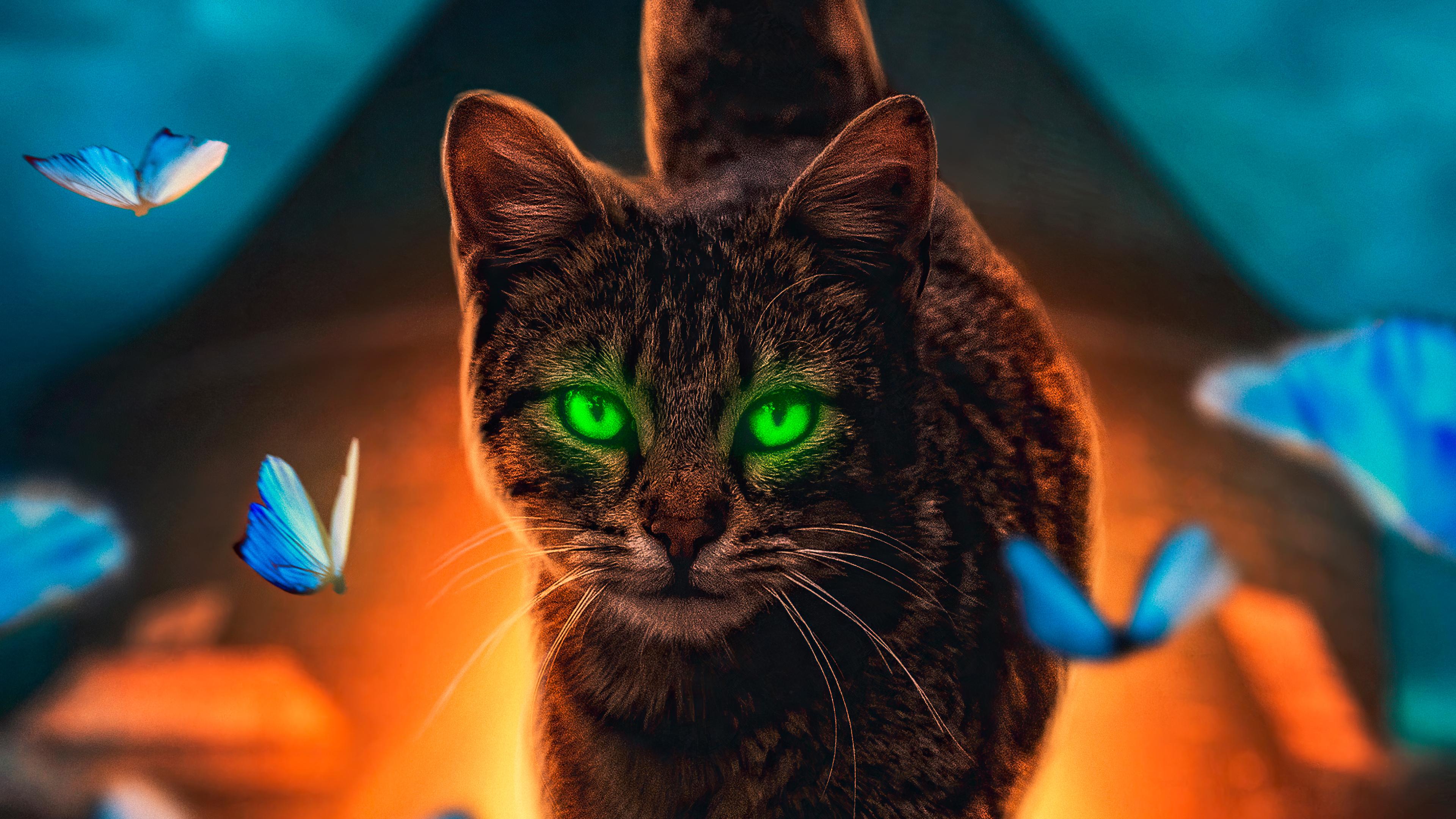 cat magical walk 4k 1602359217 - Cat Magical Walk 4k - Cat Magical Walk 4k wallpapers