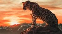 cheetah morning time 4k 1602359217 200x110 - Cheetah Morning Time 4k - Cheetah Morning Time 4k wallpapers