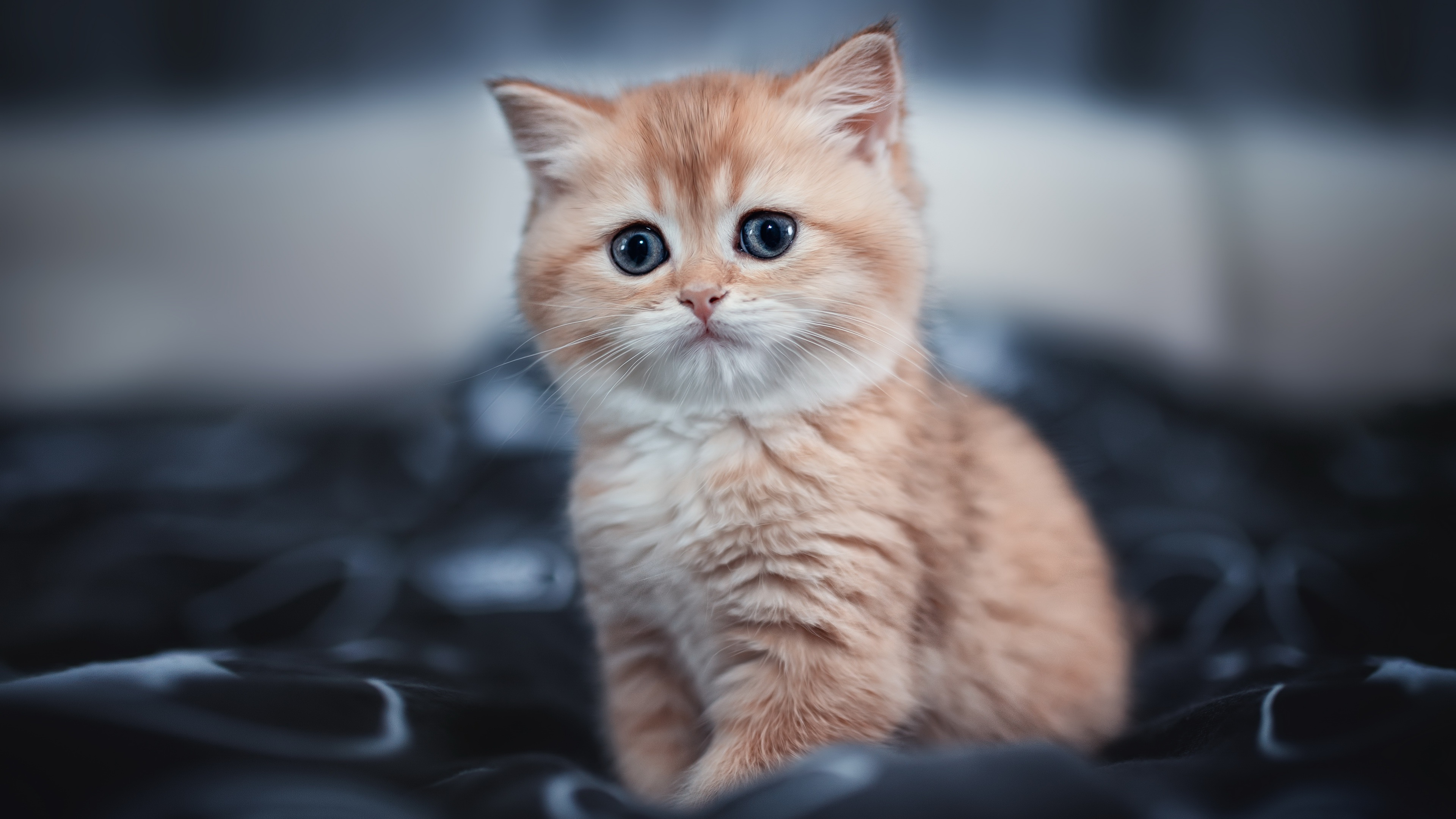Wallpaper 4k Cute Kitten 4k Cute Kitten 4k Wallpapers