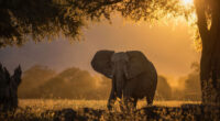 elephant forest sunbeams morning 4k 1603014719 200x110 - Elephant Forest Sunbeams Morning 4k - Elephant Forest Sunbeams Morning 4k wallpapers