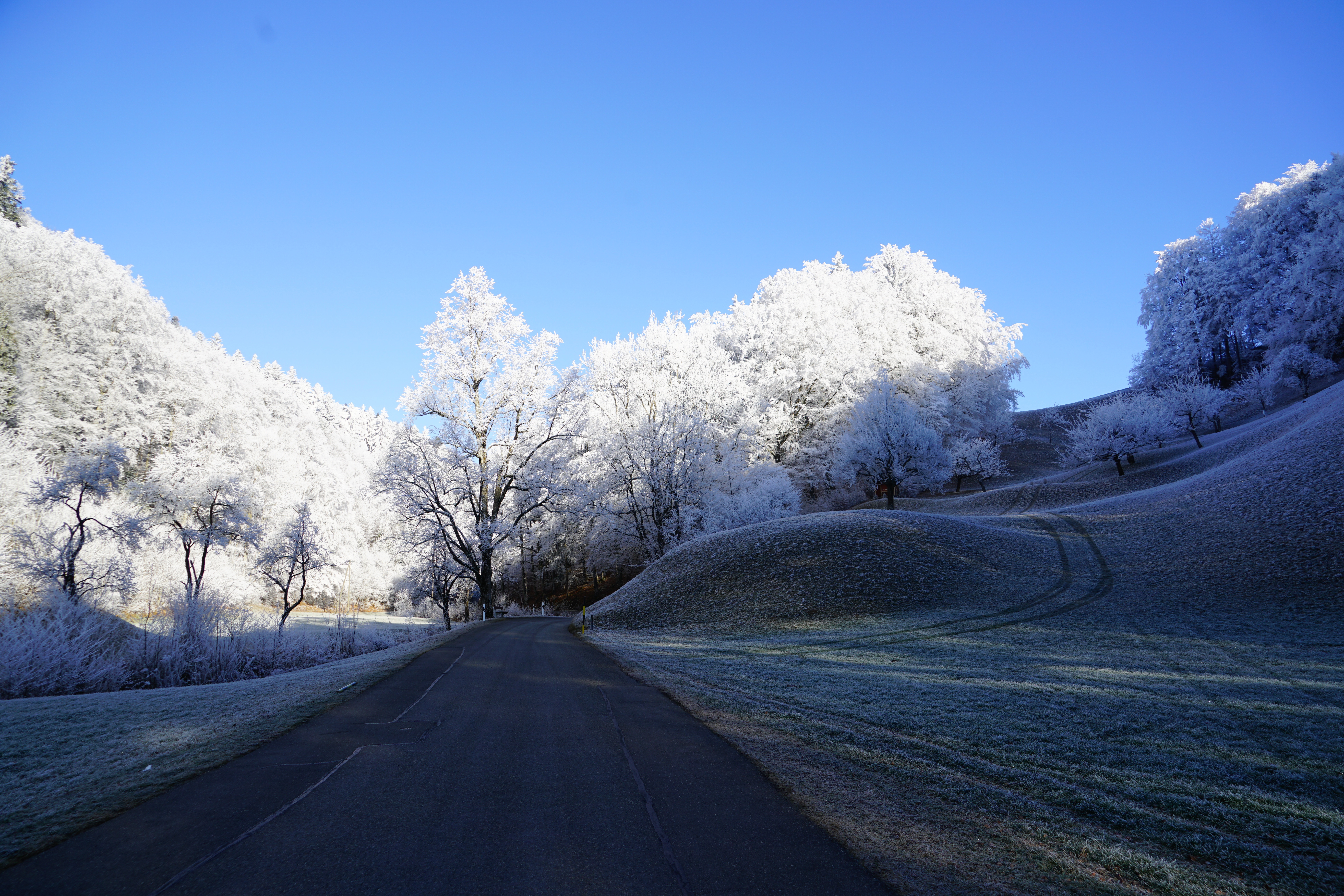 hill frost road trees 4k 1602606182 - Hill Frost Road Trees 4k - Hill Frost Road Trees 4k wallpapers